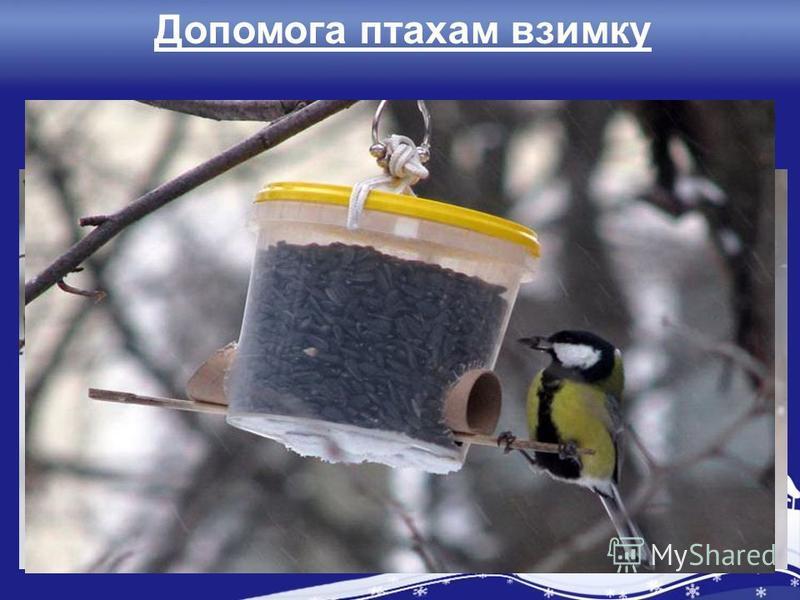 Допомога птахам взимку