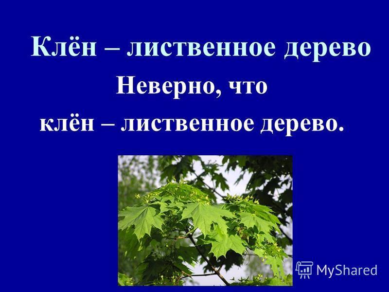 Клён – лиственное дерево Неверно, что клён – лиственное дерево.