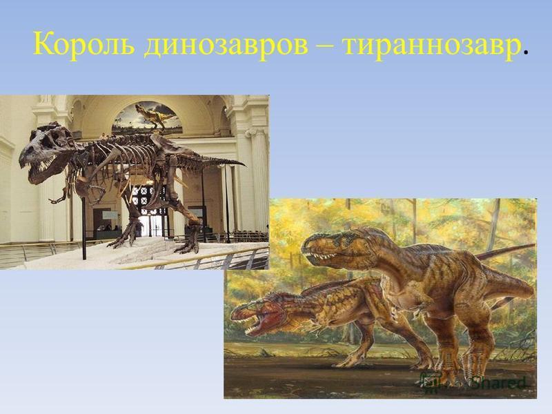 Король динозавров – тираннозавр.