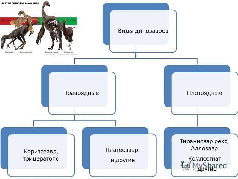 Виды динозавров Травоядные Коритозавр, трицератопс Платеозавр. и другие Плотоядные Тираннозар рекс, Аллозавр Компсогнат и другие