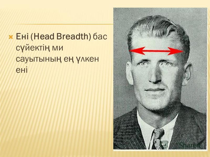 Ені (Head Breadth) бас с ү вектi ң ми сауытссыны ң е ң ү клен енi