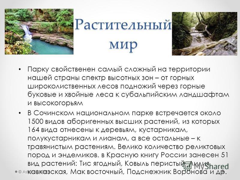 © Astahov Nikita Растительный мир Парку свойственен самый сложный на территории нашей страны спектр высотных зон – от горных широколиственных лесов подножий через горные буковые и хвойные леса к субальпийским ландшафтам и высокогорьям В Сочинском нац