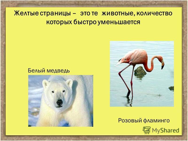 Желтые страницы – это те животные, количество которых быстро уменьшается Розовый фламинго Белый медведь
