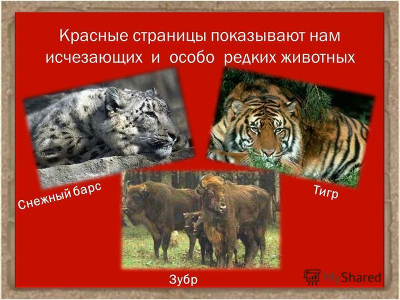 Красные страницы показывают нам исчезающих и особо редких животных Снежный барс Тигр Зубр