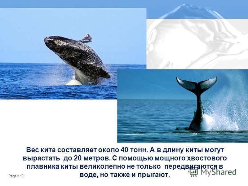 Page 10 Вес кита составляет около 40 тонн. А в длину киты могут вырастать до 20 метров. С помощью мощного хвостового плавника киты великолепно не только передвигаются в воде, но также и прыгают.