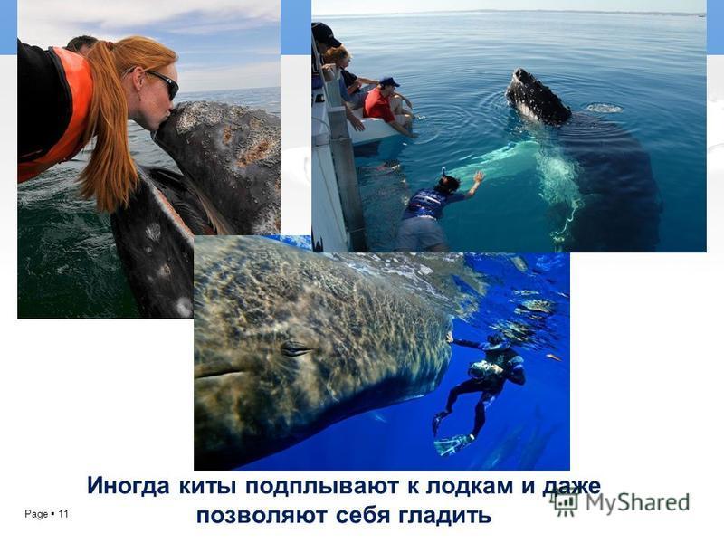 Page 11 Иногда киты подплывают к лодкам и даже позволяют себя гладить