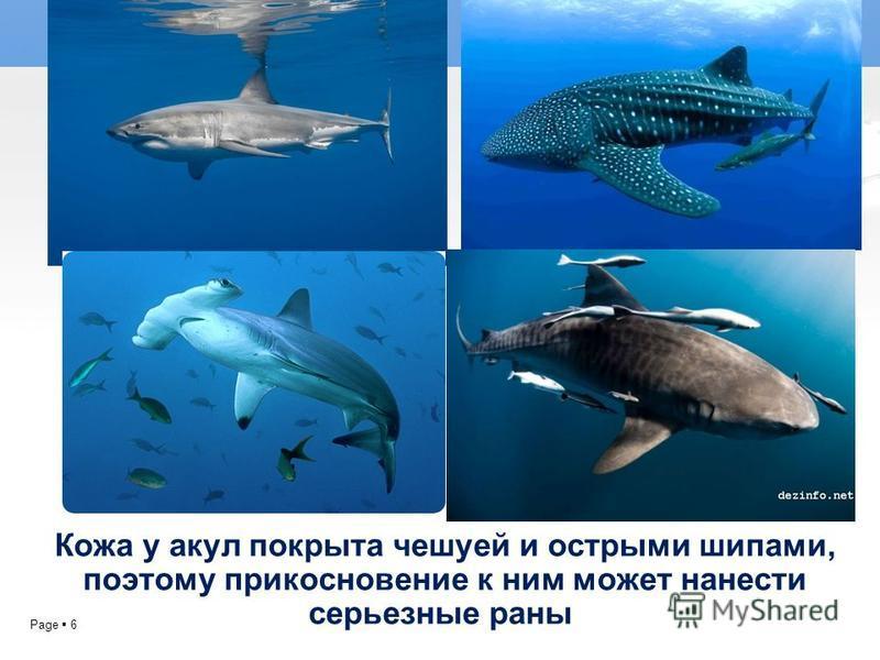 Page 6 Кожа у акул покрыта чешуей и острыми шипами, поэтому прикосновение к ним может нанести серьезные раны.