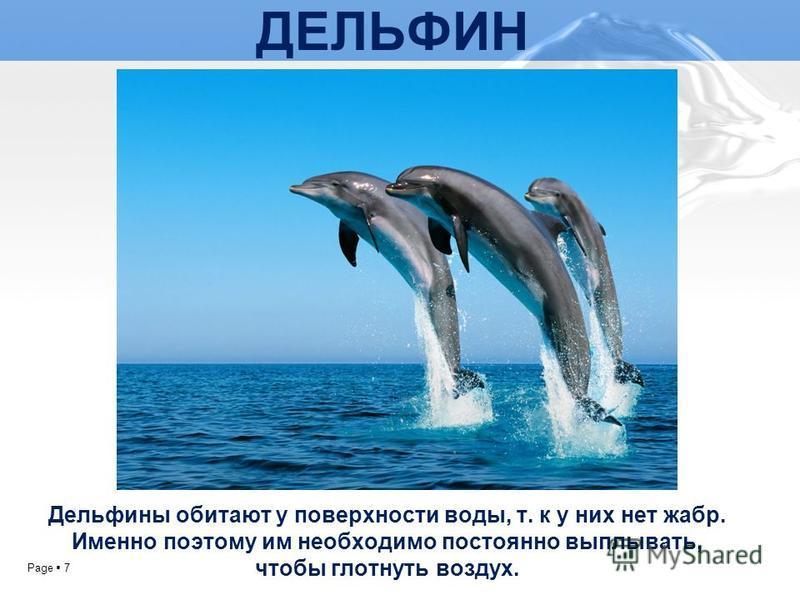 Page 7 ДЕЛЬФИН Дельфины обитают у поверхности воды, т. к у них нет жабр. Именно поэтому им необходимо постоянно выплывать, чтобы глотнуть воздух.