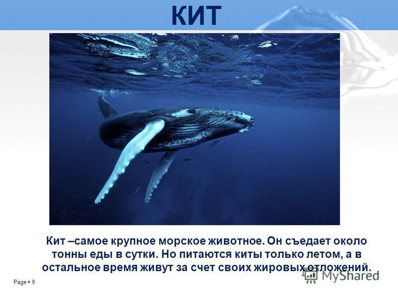 Page 9 КИТ Кит –самое крупное морское животное. Он съедает около тонны еды в сутки. Но питаются киты только летом, а в остальное время живут за счет своих жировых отложений.