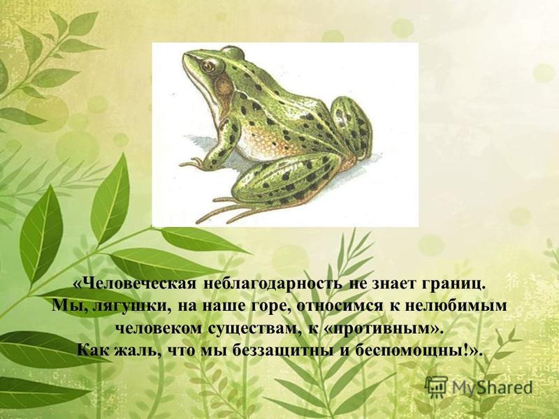 «Человеческая неблагодарность не знает границ. Мы, лягушки, на наше горе, относимся к нелюбимым человеком существам, к «противным». Как жаль, что мы беззащитны и беспомощны!».