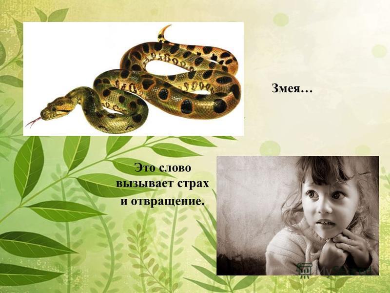 Змея… Это слово вызывает страх и отвращение.