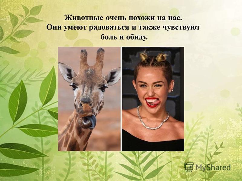 Животные очень похожи на нас. Они умеют радоваться и также чувствуют боль и обиду.