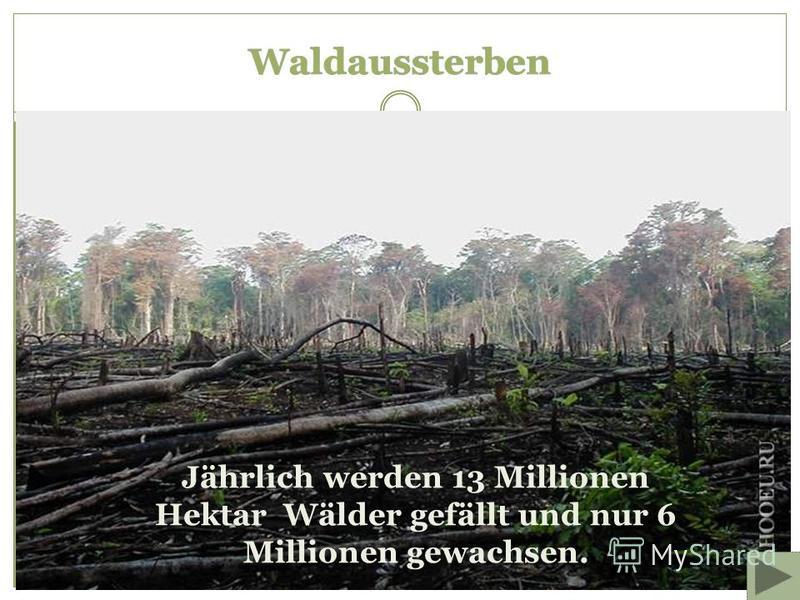 Jährlich werden 13 Millionen Hektar Wälder gefällt und nur 6 Millionen gewachsen.