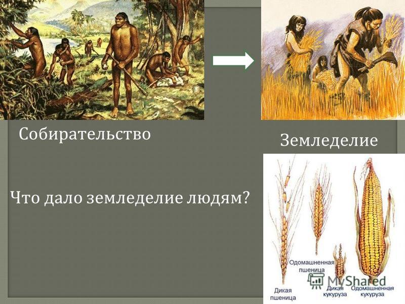 Собирательство Земледелие Что дало земледелие людям ?