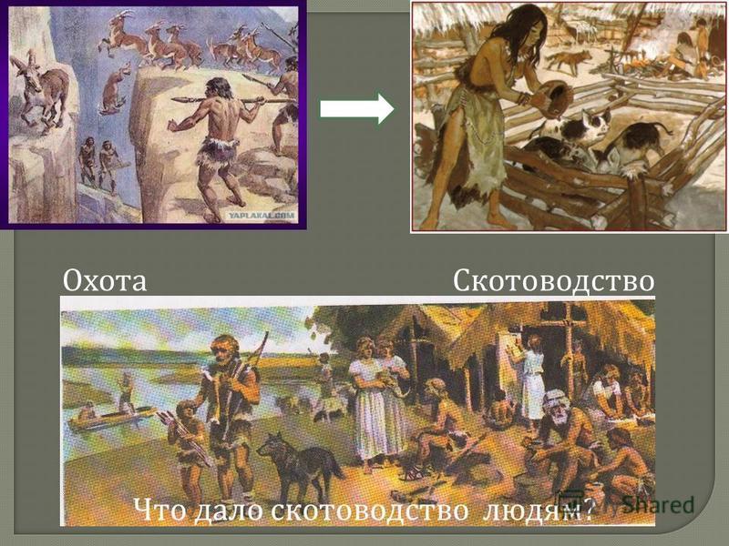 Охота Скотоводство Что дало скотоводство людям ?