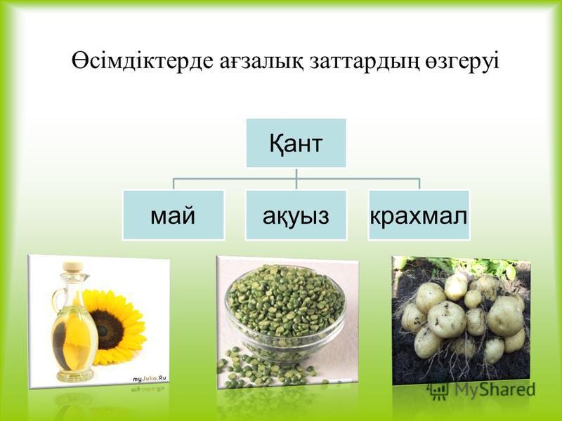 Өсімдіктерде ағзалық заттардың өзгеруі Қант майақуызкрахмал