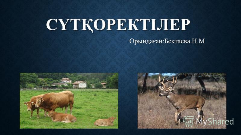 СҮТҚОРЕКТІЛЕР Орынадаған:Бектаева.Н.М