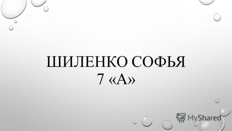 ШИЛЕНКО СОФЬЯ 7 «А»