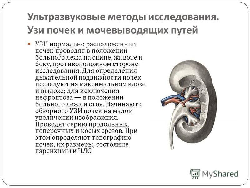 Ультразвуковые методы исследования. Узи почек и мочевыводящих путей УЗИ нормально расположенных почек проводят в положении больного лежа на спине, животе и боку, противоположном стороне исследования. Для определения дыхательной подвижности почек иссл