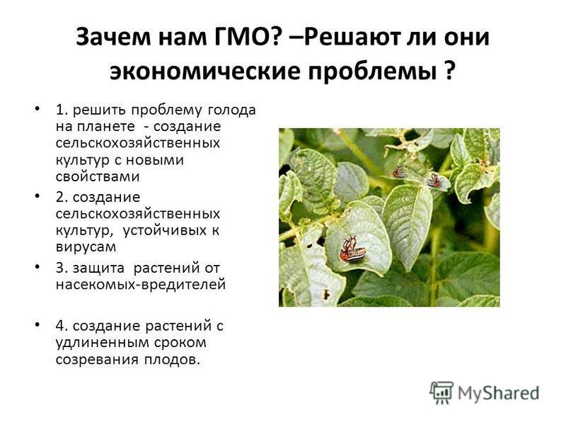 Зачем нам ГМО? –Решают ли они экономические проблемы ? 1. решить проблему голода на планете - создание сельскохозяйственных культур с новыми свойствами 2. создание сельскохозяйственных культур, устойчивых к вирусам 3. защита растений от насекомых-вре