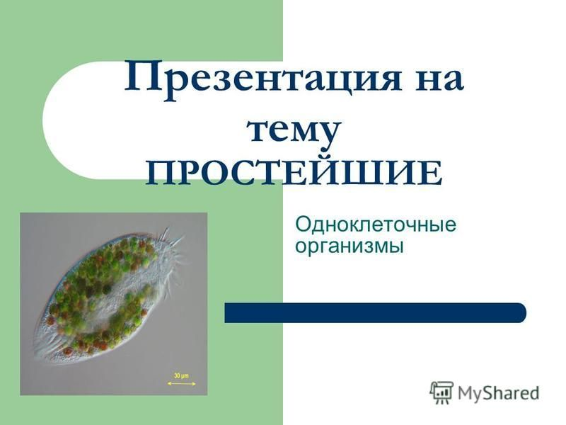 Презентация на тему ПРОСТЕЙШИЕ Одноклеточные организмы