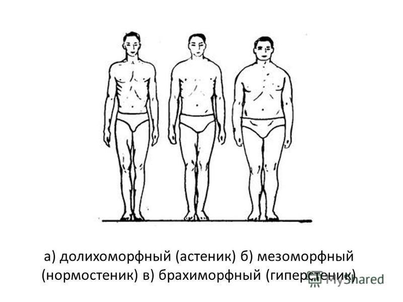 а) долихоморфный (астеник) б) мезоморфный (нормостеник) в) брахиморфный (гиперстеник)