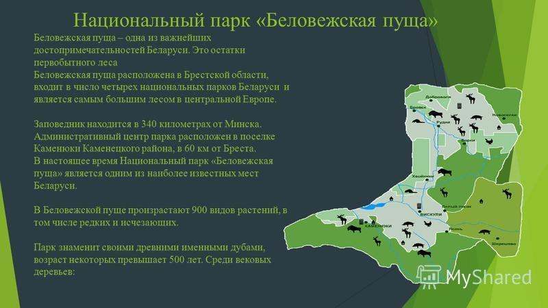 Беловежская пуща – одна из важнейших достопримечательностей Беларуси. Это остатки первобытного леса Беловежская пуща расположена в Брестской области, входит в число четырех национальных парков Беларуси и является самым большим лесом в центральной Евр