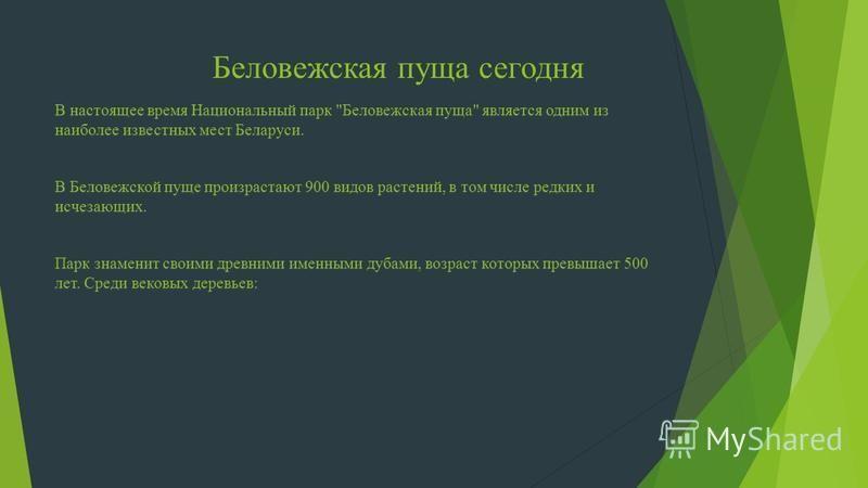 Беловежская пуща сегодня В настоящее время Национальный парк