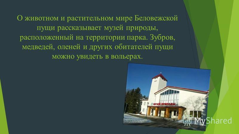 О животном и растительном мире Беловежской пущи рассказывает музей природы, расположенный на территории парка. Зубров, медведей, оленей и других обитателей пущи можно увидеть в вольерах.