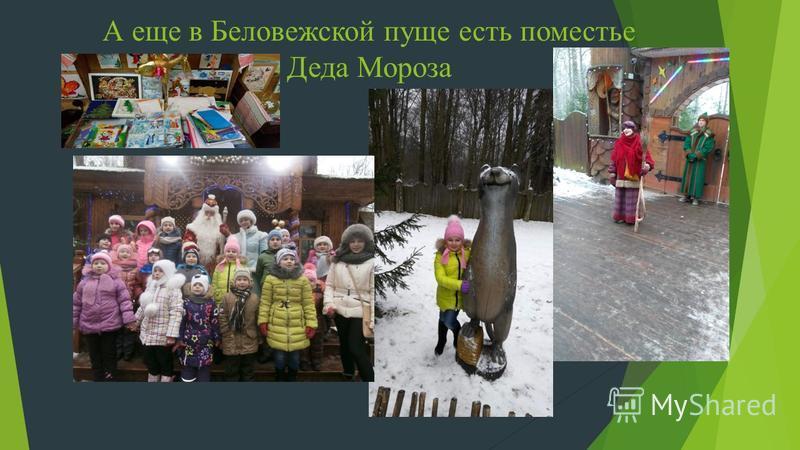 А еще в Беловежской пуще есть поместье Деда Мороза