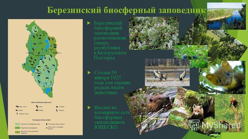 Березинский биосферный заповедник Березинский биосферный заповедник расположен на севере республики в Белорусском Поозерье. Создан 30 января 1925 года для охраны редких видов животных. Входит во всемирную сеть биосферных заповедников ЮНЕСКО.