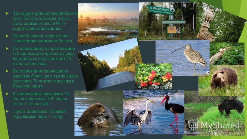 На территории заповедника есть леса, болота, водоёмы и луга. Леса занимают около 80 % территории заповедника. Также большую территорию заповедника занимают болота. По заповеднику на протяжении 110 километров протекает река Березина, которую питают 50