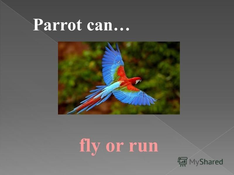 Parrot can… fly or run