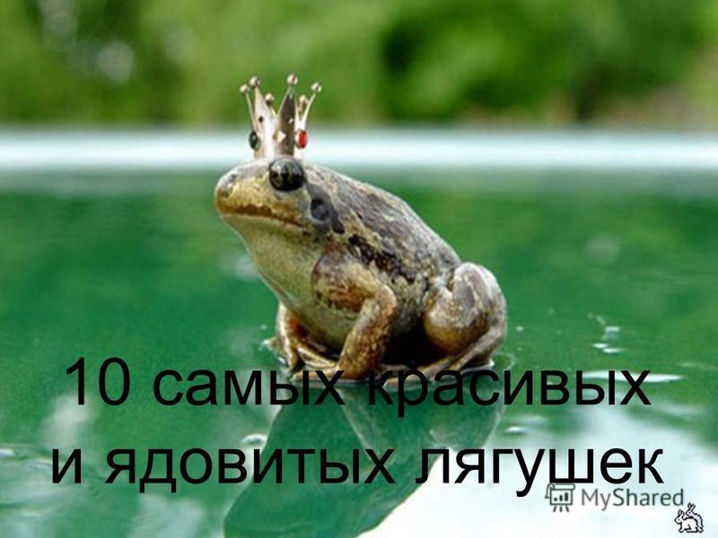 10 самых красивых и ядовитых лягушек