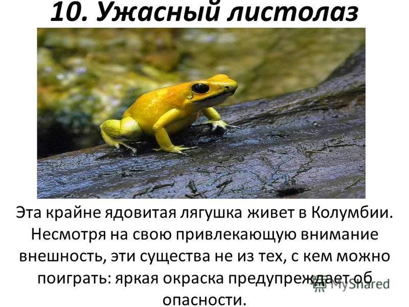 10. Ужасный листолаз Эта крайне ядовитая лягушка живет в Колумбии. Несмотря на свою привлекающую внимание внешность, эти существа не из тех, с кем можно поиграть: яркая окраска предупреждает об опасности.