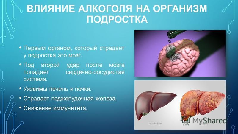 ВЛИЯНИЕ АЛКОГОЛЯ НА ОРГАНИЗМ ПОДРОСТКА Первым органом, который страдает у подростка это мозг. Под второй удар после мозга попадает сердечно - сосудистая система. Уязвимы печень и почки. Страдает поджелудочная железа. Снижение иммунитета.