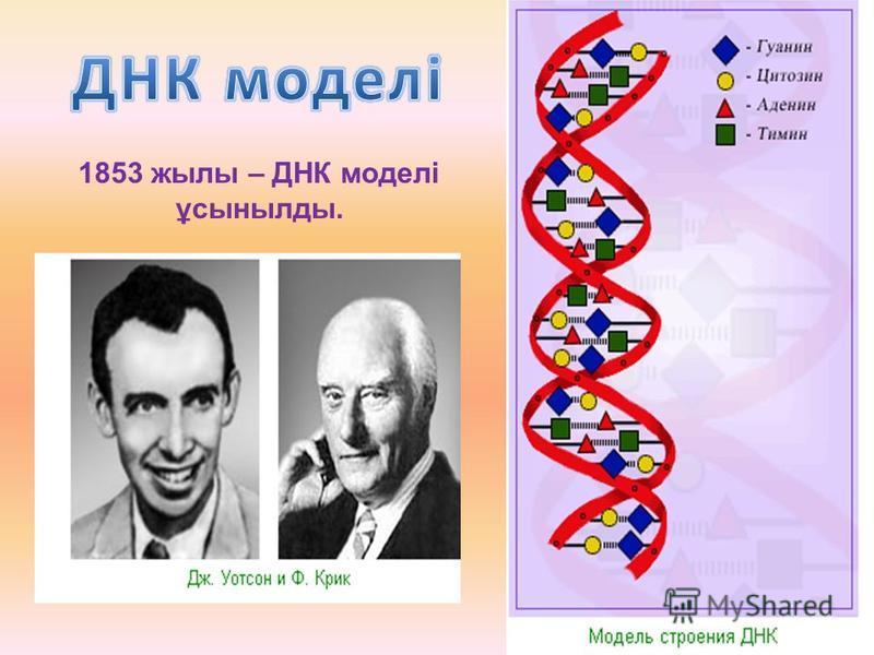 1853 жилы – ДНК моделі ұсынылды.