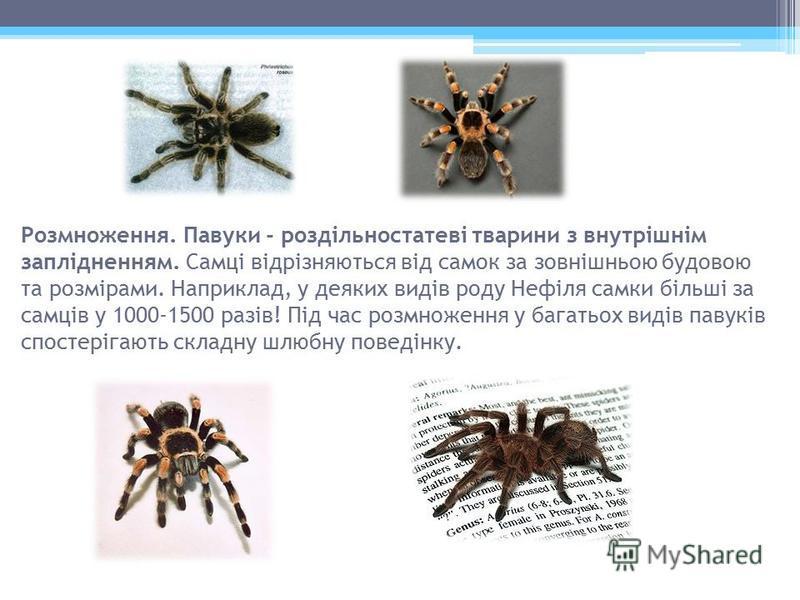 Розмноження. Павуки - роздільностатеві тварини з внутрішнім заплідненням. Самці відрізняються від самок за зовнішньою будовою та розмірами. Наприклад, у деяких видів роду Нефіля самки більші за самців у 1000-1500 разів! Під час розмноження у багатьох