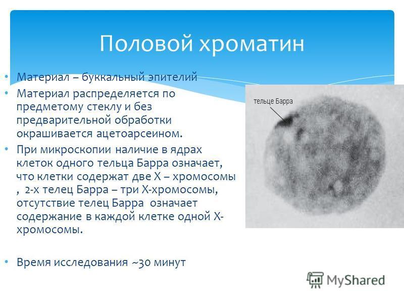 Материал – буккальный эпителий Материал распределяется по предметному стеклу и без предварительной обработки окрашивается ацетоарсеином. При микроскопии наличие в ядрах клеток одного тельца Барра означает, что клетки содержат две Х – хромосомы, 2-х т