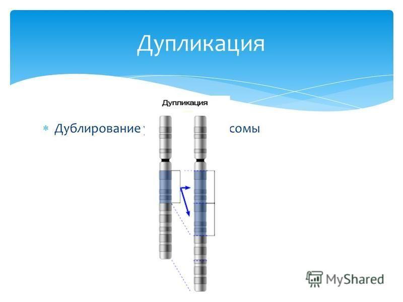 Дублирозвание участка хромосомы Дупликация
