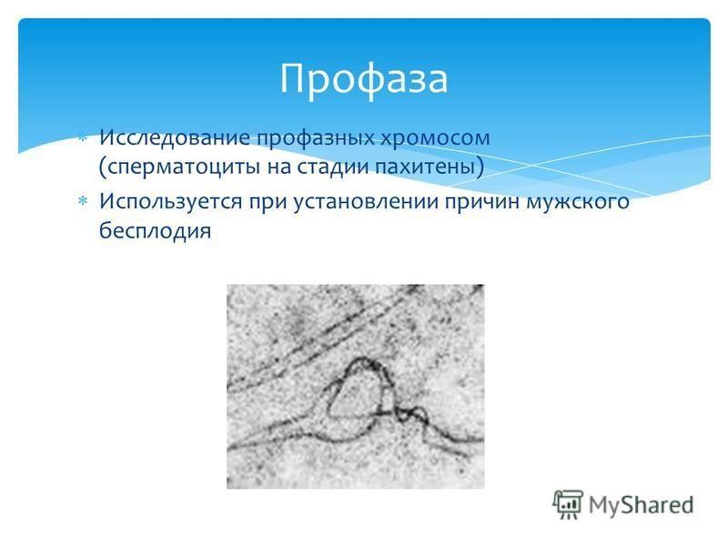 Исследозвание про фазных хромосом (сперматоциты на стадии пахитены) Используется при установлении причин мужского бесплодия Профаза
