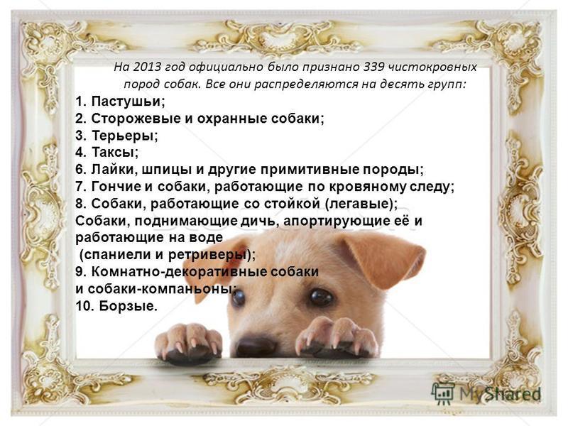 На 2013 год официально было признано 339 чистокровных пород собак. Все они распределяются на десять групп: 1. Пастушьи; 2. Сторожевые и охранные собаки; 3. Терьеры; 4. Таксы; 6. Лайки, шпицы и другие примитивные породы; 7. Гончие и собаки, работающие