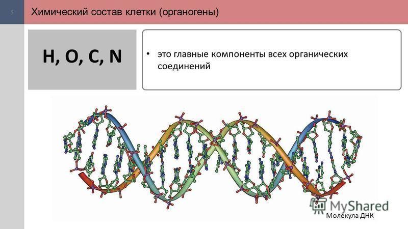 Химический состав клетки (органогены) 5 это главные компоненты всех органических соединений H, O, C, N Молекула ДНК
