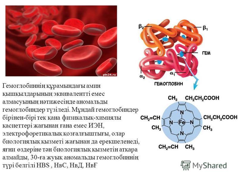 Гемоглобиннің құрамындағы амин қышқылдарының эквивалентті емес алмасуының нәтижесінде аномальды гемоглобиндер түзіледі. Мұндай гемоглобиндер бірінен-бірі тек қана физикалық-химиялы қасиеттері жағынан ғана емес ИЭН, электрофоретикалық қозғалғыштығы, о