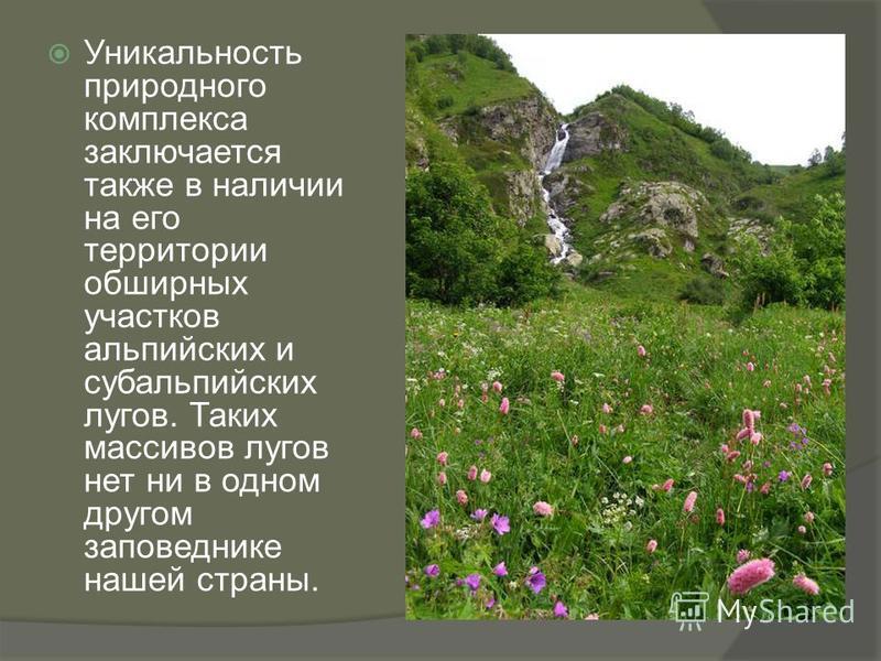 Уникальность природного комплекса заключается также в наличии на его территории обширных участков альпийских и субальпийских лугов. Таких массивов лугов нет ни в одном другом заповеднике нашей страны.