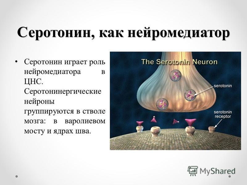 Серотонин, как нейромедиатор Серотонин играет роль нейромедиатора в ЦНС. Серотонинергические нейроны группируются в стволе мозга: в варолиевом мосту и ядрах шва.