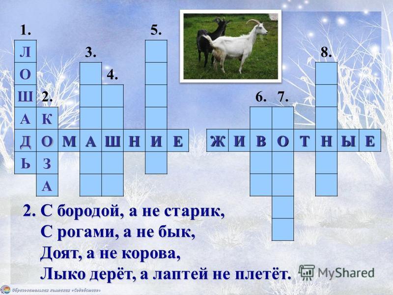 ДОМАШНИЕ ЖИВОТНЫЕ 2. С бородой, а не старик, С рогами, а не бык, Доят, а не корова, Лыко дерёт, а лаптей не плетёт. 1. 2. 3. 4. 5. 6.7. 8. ЛО Ш А Д Ь КО З А