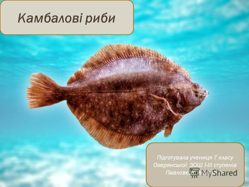 Камбалові риби Підготувала учениця 7 класу Озерянської ЗОШ I-III ступенів Павловець Анастасія