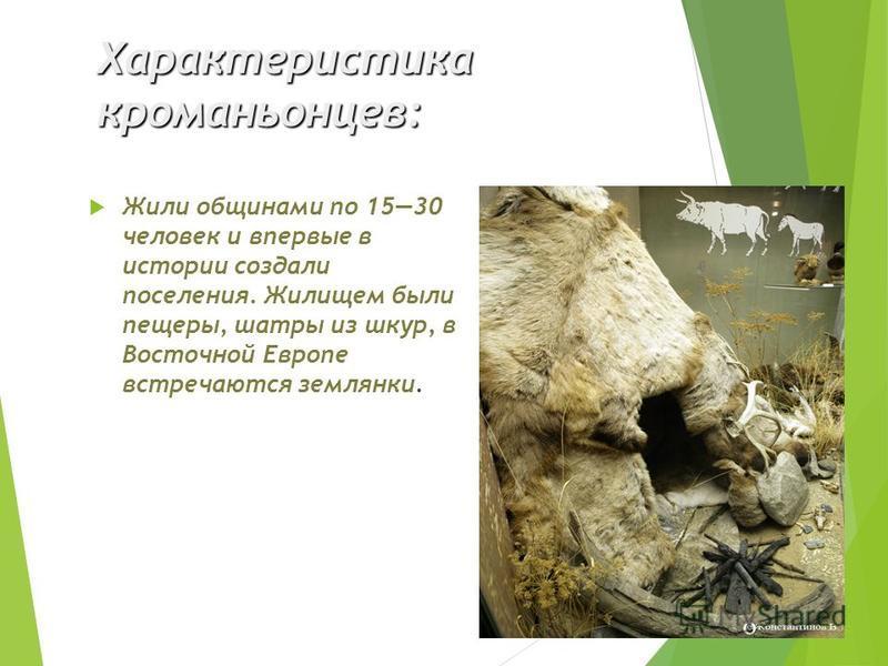 Характеристика кроманьонцев: Жили общинами по 1530 человек и впервые в истории создали поселения. Жилищем были пещеры, шатры из шкур, в Восточной Европе встречаются землянки.