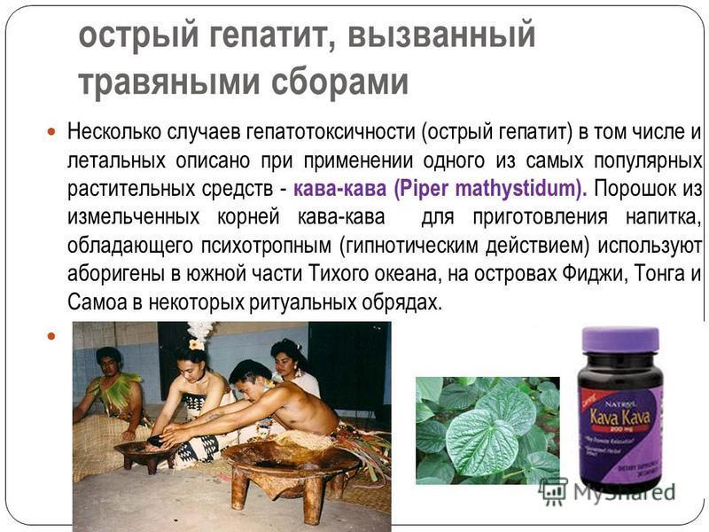 острый гепатит, вызванный травяными сборами Несколько случаев гепатотоксичности (острый гепатит) в том числе и летальных описано при применении одного из самых популярных растительных средств - кава-кава (Piper mathystidum). Порошок из измельченных к
